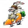 Edible Bunny Race Car