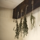 Creative in the Kitchen: Chillin with herbs