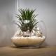 Tiny Air Plant Pot