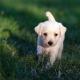 Puppy Season